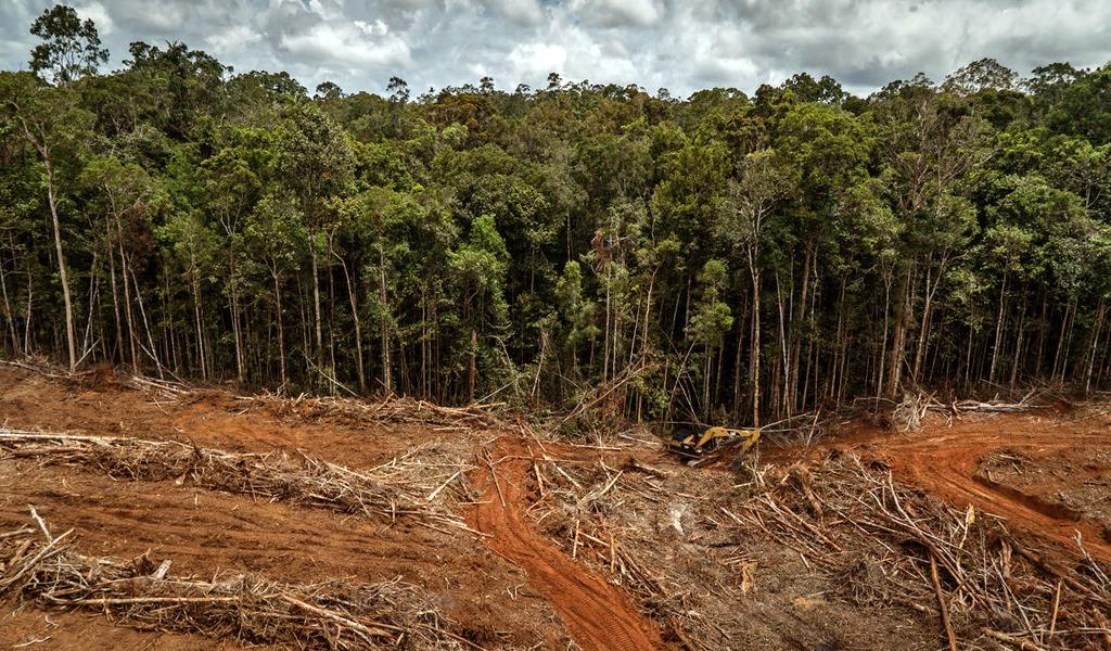 Invasiones y deforestacion
