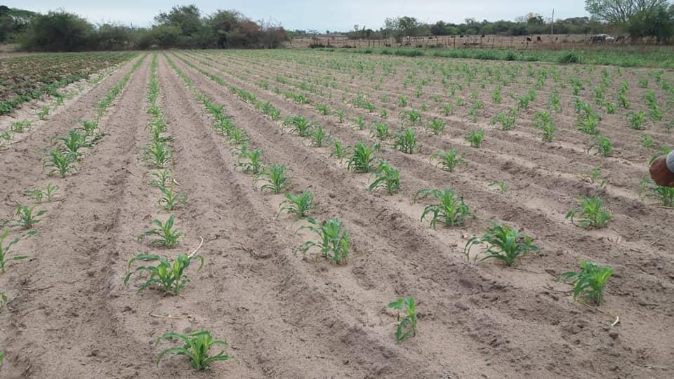 Lluvias traen beneficios a sectores productivos de Ñeembucú
